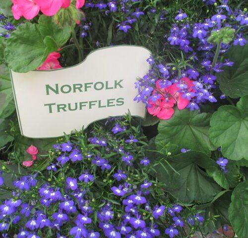 Norfolk Truffles